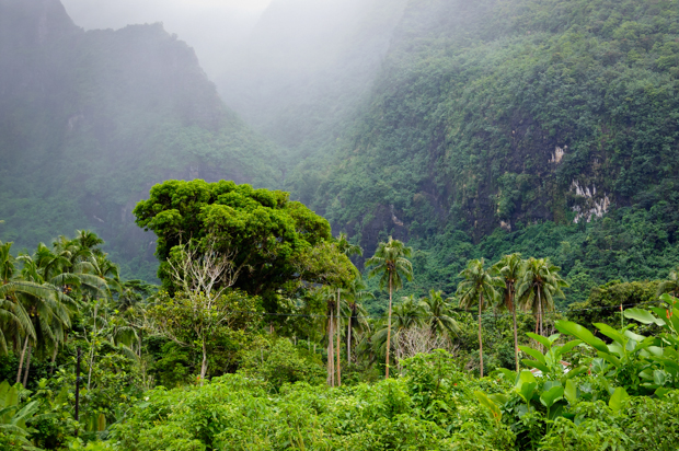 travel image of rainforest from moorea, tahiti, south pacific