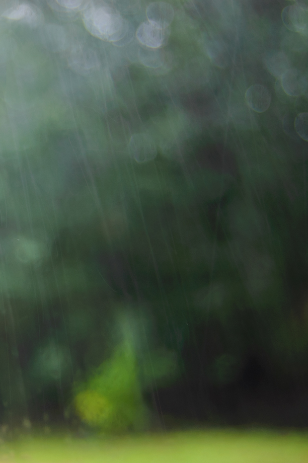 abstract photograph of greenery and rain from the south pacific
