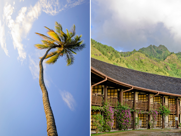 travel photograph of palm tree, blue sky, green mountains in tahiti