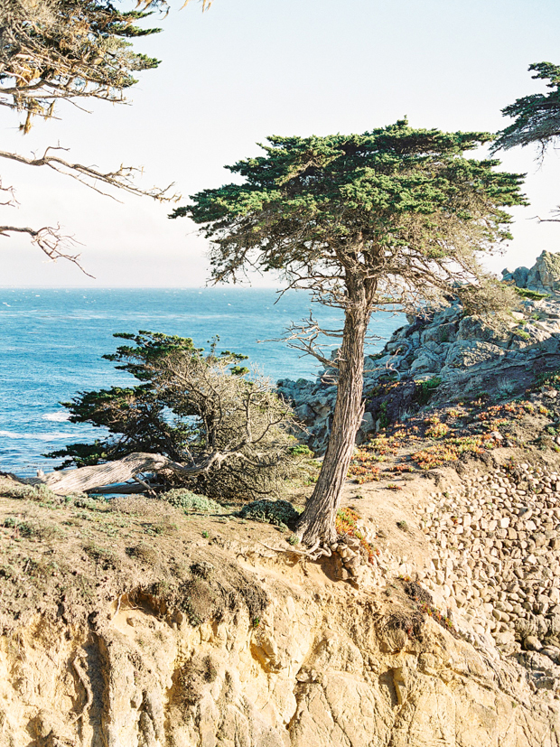 Lone Cypress Monterey California Travel Photograph