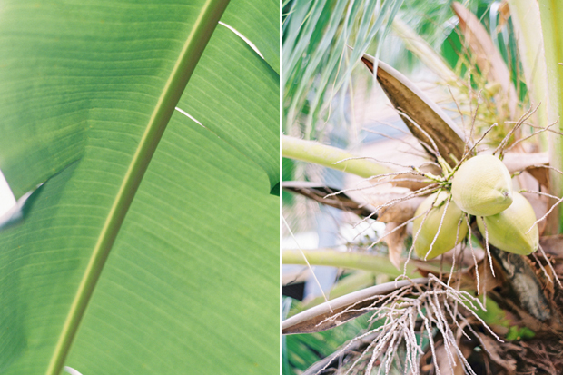 palm details in the south seas