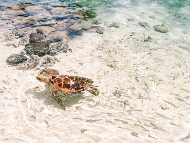 sea turtle swimming in tropical waters